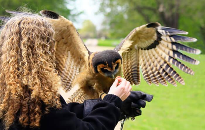 Woman feeding bird of prey