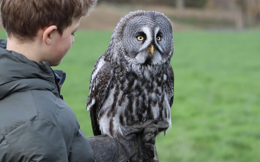 The Ultimate Guide to Our Falconry Experience Days