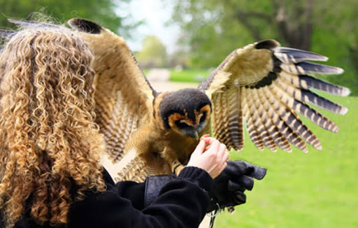 Our Guide to Common Falconry Terms