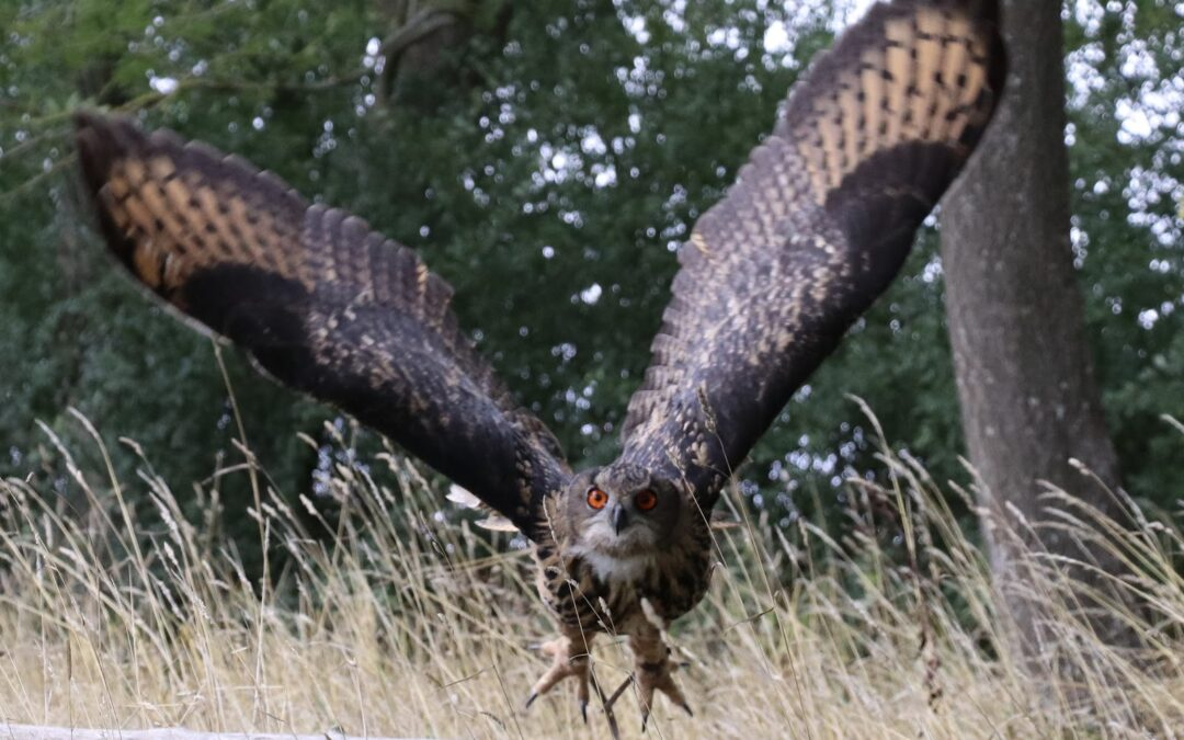What Are the Largest Birds of Prey?